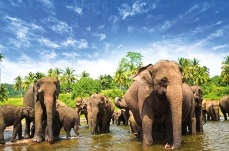 5 Days Itinerary to Discover Sri Lanka With Kids in Tow